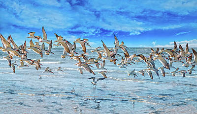 Helicopter Photograph - Topsail Skimmers by Betsy Knapp