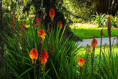 Photograph - Torch Lilies In The Park by Bonnie Follett