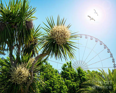 Photograph - Torquay Tropical by Edmund Nagele