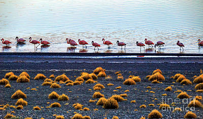 Photograph - Torres Del Paine 06 by Bernardo Galmarini
