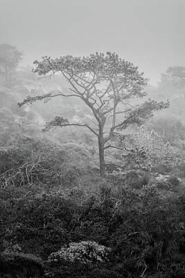 Torrey In Fog Art Print