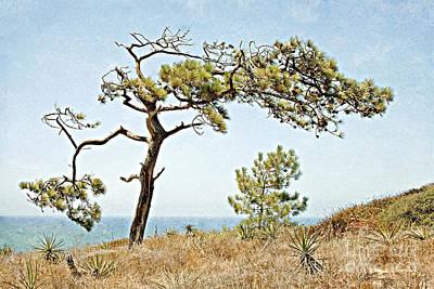 Photograph - Torrey Pine 3 by Gabriele Pomykaj