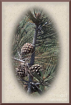 Pinion Photograph - Torrey Pine Cones - 2 by Charles Robinson