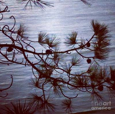 Photograph - Torrey Pine by Denise Railey
