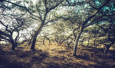 Photograph - Torrey Pine Grove by Alexander Kunz
