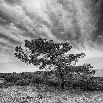 Photograph - Torrey Pine by Hugh Smith