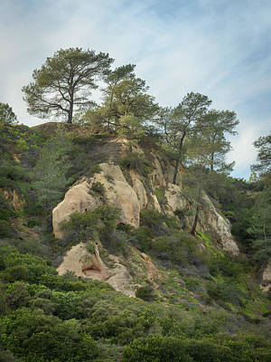 Photograph - Torrey Pines And Sandstone by Alexander Kunz