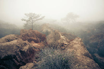 Photograph - Torrey Pines - Lost In Reverie by Alexander Kunz