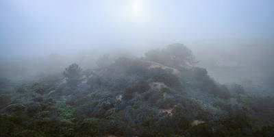 Photograph - Torrey Pines - Shrouded Knoll by Alexander Kunz