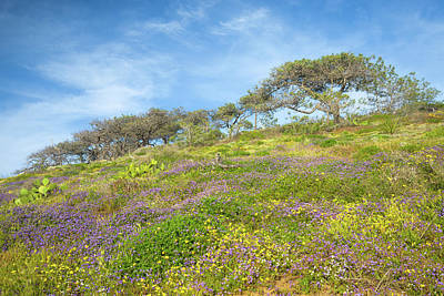 Photograph - Torrey Pines Wildflower Bloom by Alexander Kunz