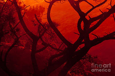 Photograph - Torrey Pines Glow by John F Tsumas