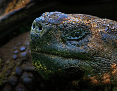 Photograph - Tortoise 2 by Ray Kent