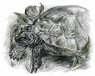 Drawing - Tortoise Among The Ferns by MM Anderson