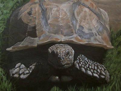 Painting - Tortoise by Karen Ilari