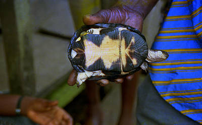 Photograph - Tortoise Niger Delta by Muyiwa OSIFUYE