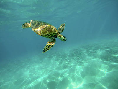 Ocean Turtle Photograph - Tortoise by Happy Home Artistry