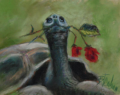 Pastel - Tortoise Romance by Billie Colson
