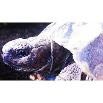 Photograph - #tortoise #torts #sunbathing #basking by Natalie Anne