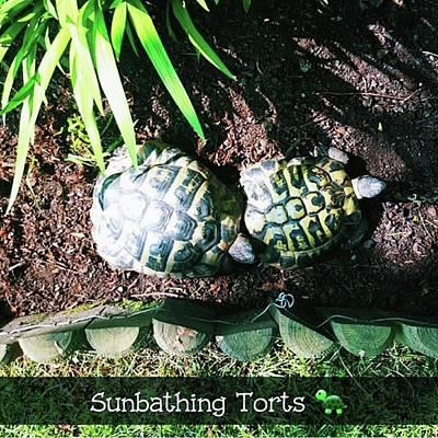 #tortoise #torts #sunbathing #garden Art Print by Natalie Anne