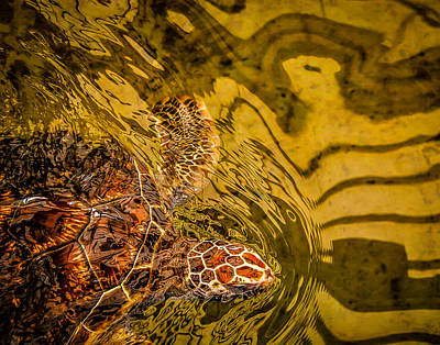 Mazunte Photograph - Tortuga De Mexico by Jay Rasmussen