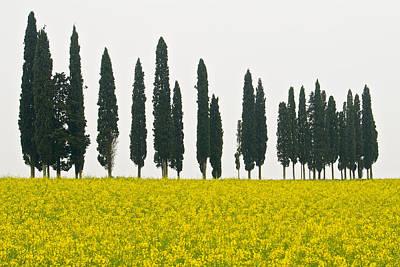 Toscana Cypresses Art Print by Igor Voljch
