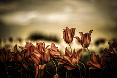 Photograph - Tousled Tulips by Wes and Dotty Weber