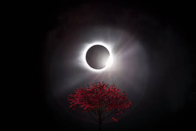 Photograph - Total Eclipse Of The Sun In Art Diamond Ring And Tree by Debra and Dave Vanderlaan