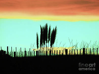 Photograph - Totitoi Sunset II by Karen Lewis