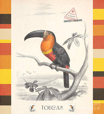 Drawing - Toucan Bird Responsible Travel Art by Nola Lee Kelsey