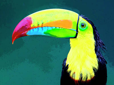 Photograph - Toucan by Dominic Piperata