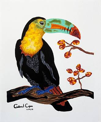 Drawing - Toucan by Gabriel Cajina