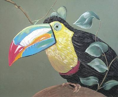 Pastel - Toucan by Joan Mansson