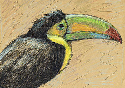 Painting - Toucan by June Walker
