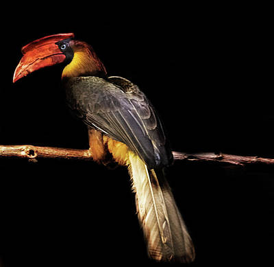 Wild Parrots Photograph - Toucan by Martin Newman
