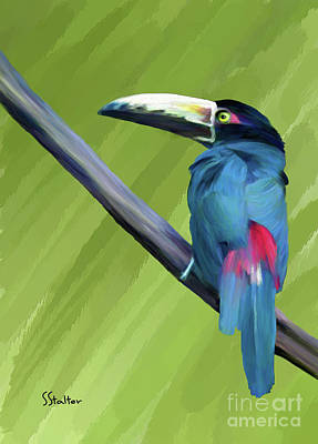 Painting - Toucan On A Branch by Shirley Stalter