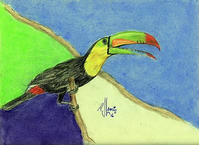 Toucan Drawing - Toucan by PJ Lewis