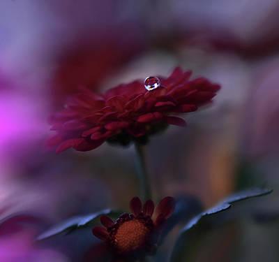 Photograph - Touch... by Juliana Nan