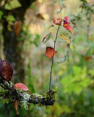 Photograph - Touch Of Autumn by I'ina Van Lawick