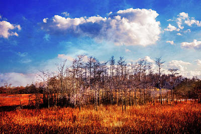Photograph - Touch Of Autumn In The Glades by Debra and Dave Vanderlaan