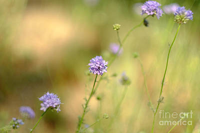 Photograph - Touch Of Lavender Light by Parrish Todd