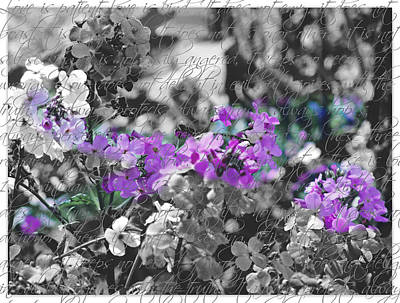 Touch Of Phlox Art Print