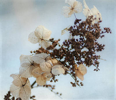Photograph - Touch Of Winter by Fraida Gutovich