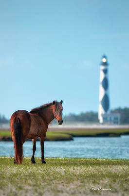 Dan Beauvais Royalty-Free and Rights-Managed Images - Tour Guide Cape Lookout 3509 by Dan Beauvais