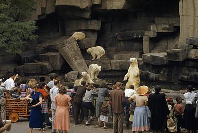 Tourists Watch Captive Polar Bears Art Print