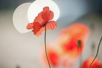 Photograph - Towards Sun. Melody Of Heaven by Jenny Rainbow