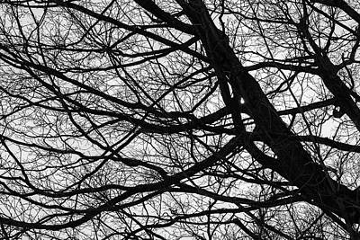 Photograph - Tower Hill Bare Branches Bnw by Michael Saunders