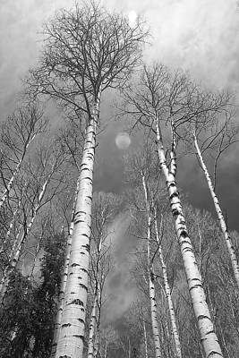 Tree Photograph - Towering Aspen Trees In Black And White by James BO  Insogna