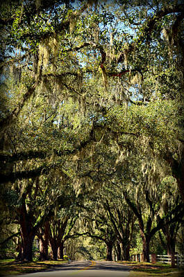 Photograph - Towering Canopy by Carla Parris