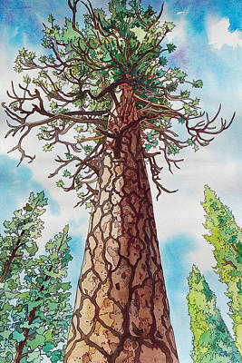Painting - Towering Ponderosa Pine by Terry Holliday