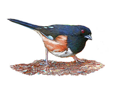 Digital Art - Towhee Standing On The Ground by Yuichi Tanabe
